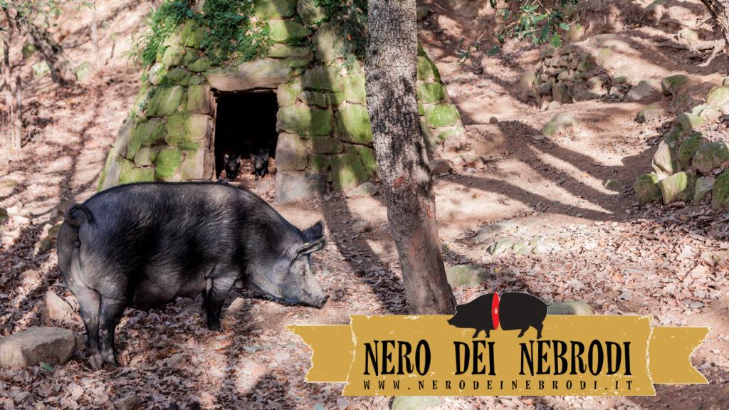 porc noir des Nébrodes